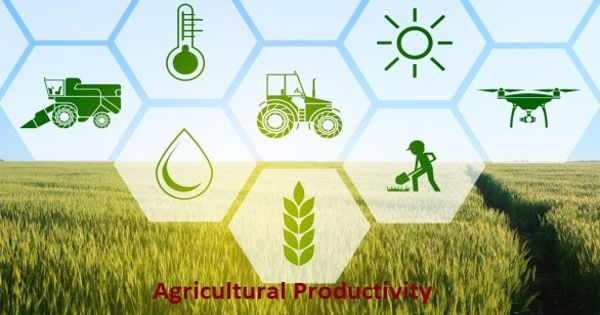 What is Agriculture Productivity- Zoefact
